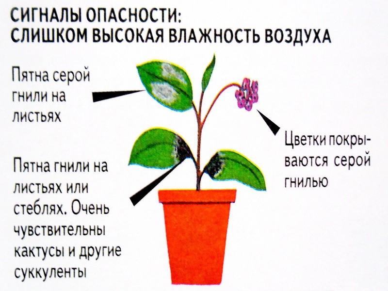Влажность для растений